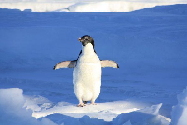 SEOアフィリエイトなら知っておきたいペンギンアップデートとは?